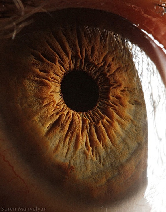 Pictures Of Eyes Up Close. eyes look like up close.